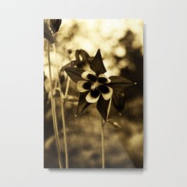 Flowers - Purple Columbine  Metal Print