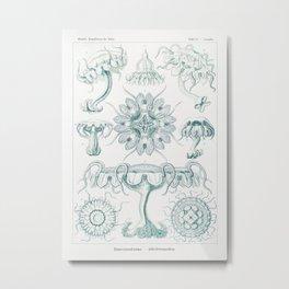 Creatures of the seas by Ernst Haeckel, German art. Metal Print