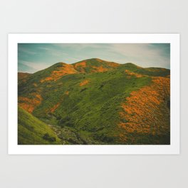 California Poppies 038 Art Print