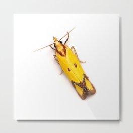 Sulphur Knapweed Moth (Agapeta zoegana) Metal Print