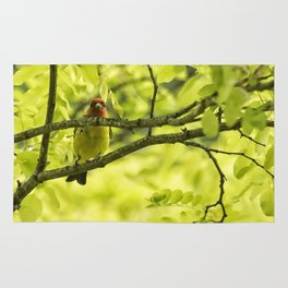 Male Western Tanager, No. 1 Rug