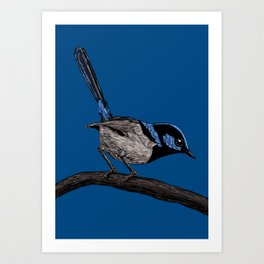 Fairy wren drawing  Art Print
