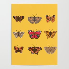 Butterflies Mounted on Yellow Poster