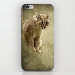 Caracal- wild cat iPhone Skin