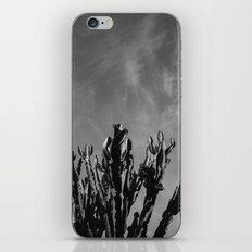 Monochrome Cactus Sky iPhone & iPod Skin