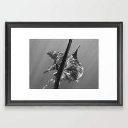 Talk To The Tail Framed Art Print