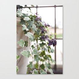 Trailing Ivy Canvas Print