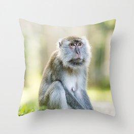 Crab Eating Macaque, Borneo Throw Pillow
