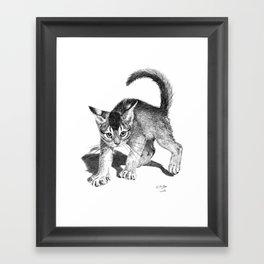 Furious kitten SKnb88 Framed Art Print