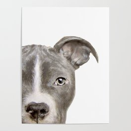 Pit bull with white background Poster