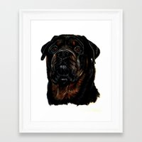 rottweiler Framed Art Prints featuring Male Rottweiler by taiche