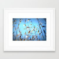 grass Framed Art Prints featuring grass by  Agostino Lo Coco