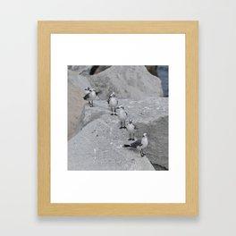Laughing Gulls Lineup Framed Art Print