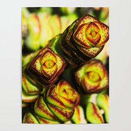 succulent cactus II Poster