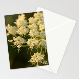Queen Anne's Lace Flower Stationery Cards