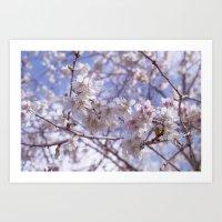 Blossom, Bloomin Blossom.  Art Print