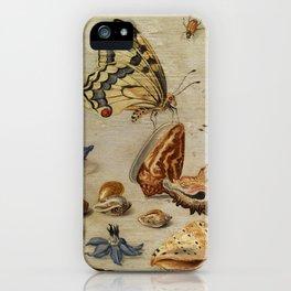 "Jan van Kessel de Oude ""Seashells, butterflies, flowers and insects"" iPhone Case"