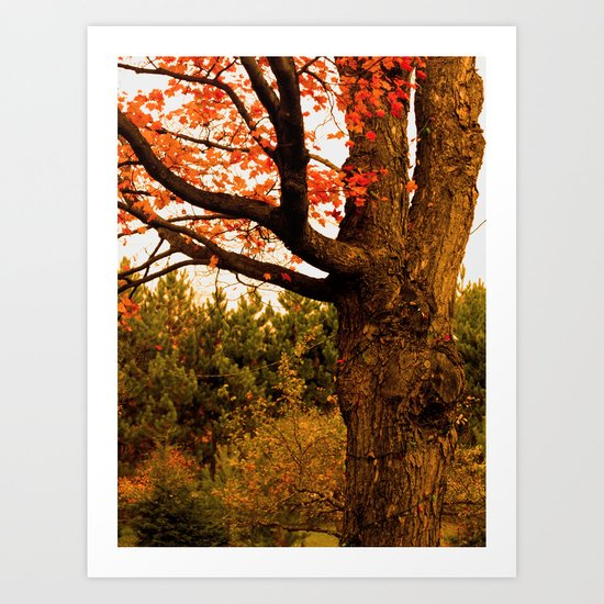 Autumn Lights Art Print