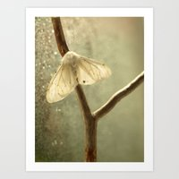 moth Art Prints featuring moth by Nature In Art...