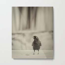 Betsy's Crow In The Snow Metal Print
