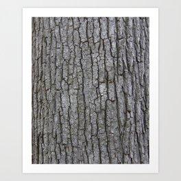 white oak bark Art Print