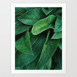 borage Art Print