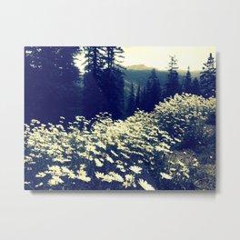 Daisy fields of September Metal Print