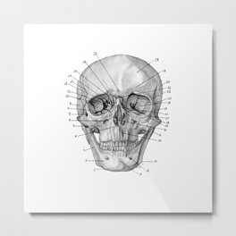 Anatomical Skull Metal Print