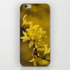 Gold Regen iPhone & iPod Skin