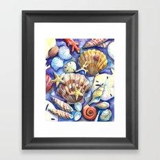 Seashells 3 Framed Art Print