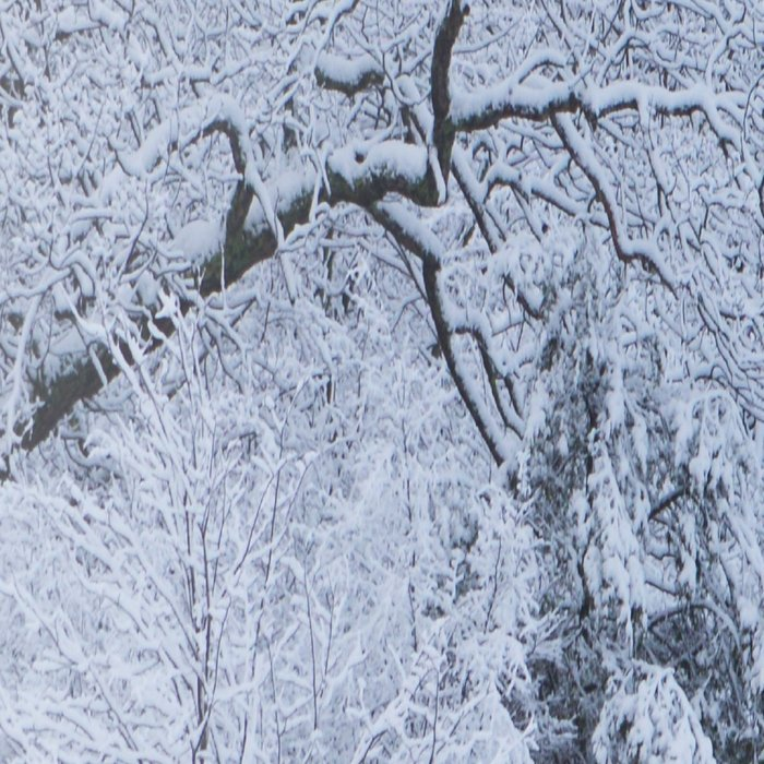 First Snow Fall Fresh Snow on Trees Nature Photography ~ Winter Hush Leggings