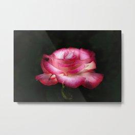 Lightful Rose Metal Print