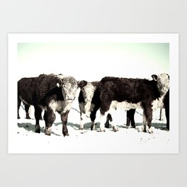 B&W Calves Art Print