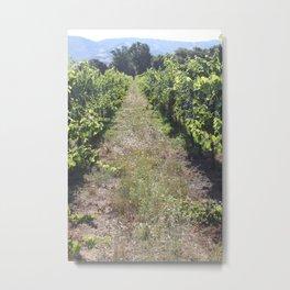 Mendocino Vineyard Metal Print