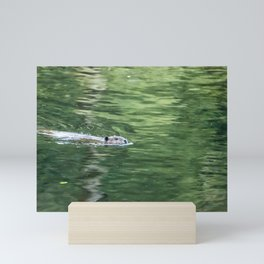 Beaver on an Evening Swim Mini Art Print