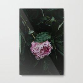 Pink Peony After Rain IV Metal Print