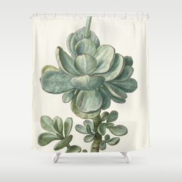 Herman Saftleven - Succulent (probably a Cotyledon orbiculata) - 1683 Shower Curtain