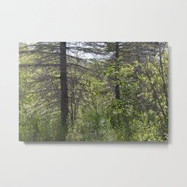 Summer Forest 3 Metal Print