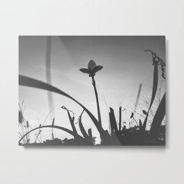 158 | austin Metal Print