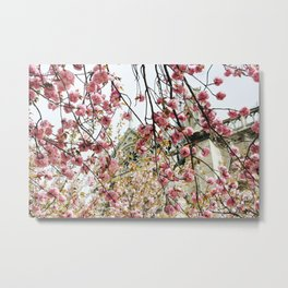 Cherry Blossoms at Notre Dame Metal Print