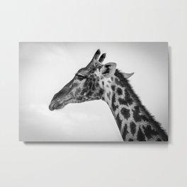 B&W Giraffe 3 Metal Print