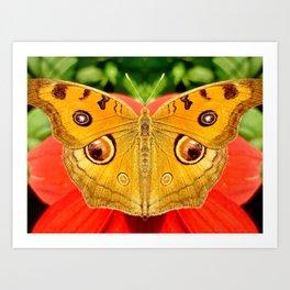 Meadow Argus Butterfly Art Print