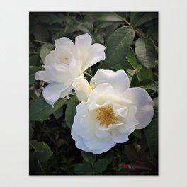 White flower in Butchart's Garden Canvas Print