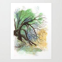 Trees bending over the water Art Print