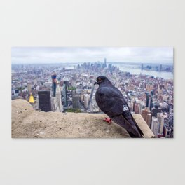 Bird in the City Canvas Print