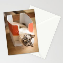 The cute cat in the box Stationery Cards