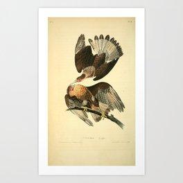 Caracara Eagle8 Art Print