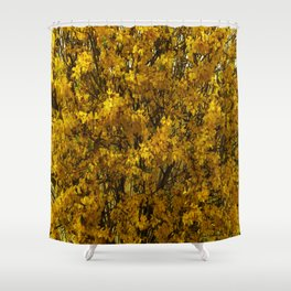 Northern Golden Forsythia Shower Curtain