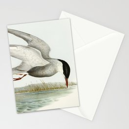 Seabird illustration Stationery Cards
