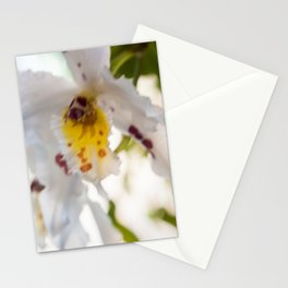 Orchid White Stationery Cards